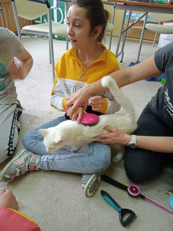 Felinoterapia - na zdjęciu dziewczynka czesząca kota